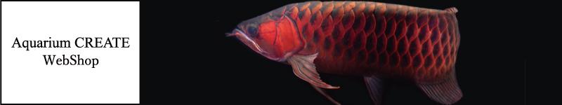 アジアアロワナ・淡水エイ・古代魚等豊富に取り扱っているAquariumCREATEのウェブショップ