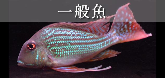 一般魚・熱帯魚